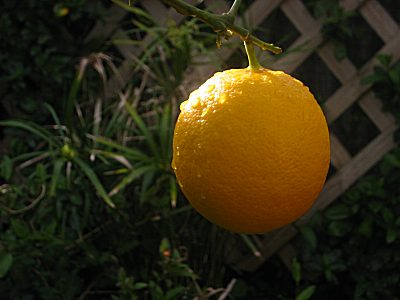 take%20a%20nice%20lemon.jpg