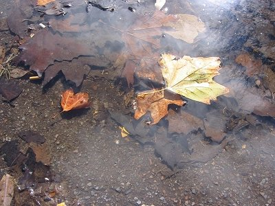 leaves%20suspended%20in%20a%20puddle.jpg